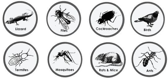 8-pest-control