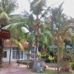 homestay coconut tree
