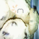 Cookies cake salsabila (11)