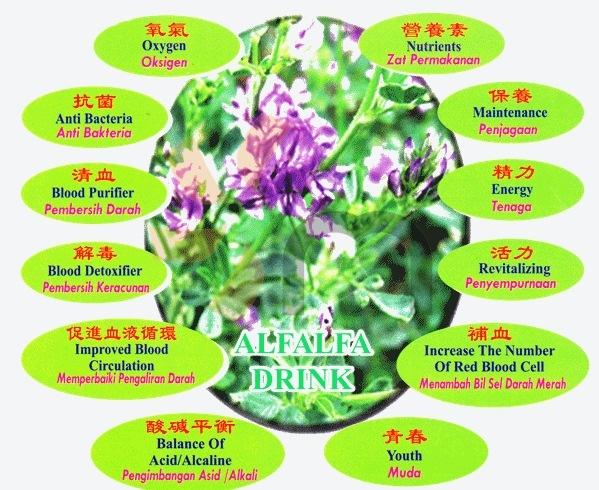 Goodness of Alfalfa Drinks malaysia