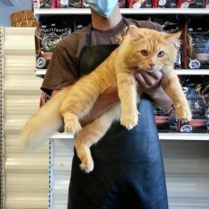 cat grooming malaysia