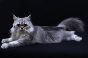 cat shop melaka