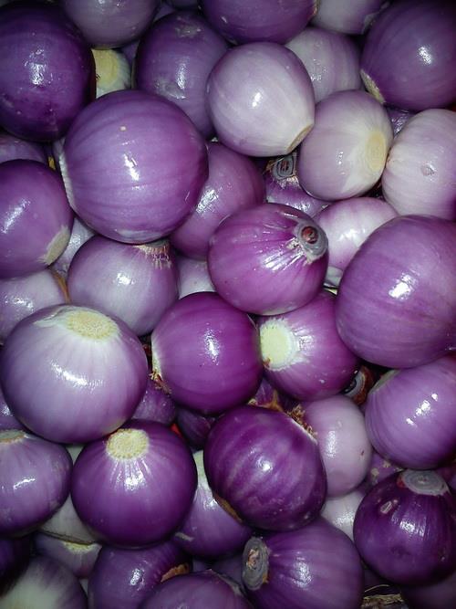 asy enterprise onion supply garlic bawang putih wholesale
